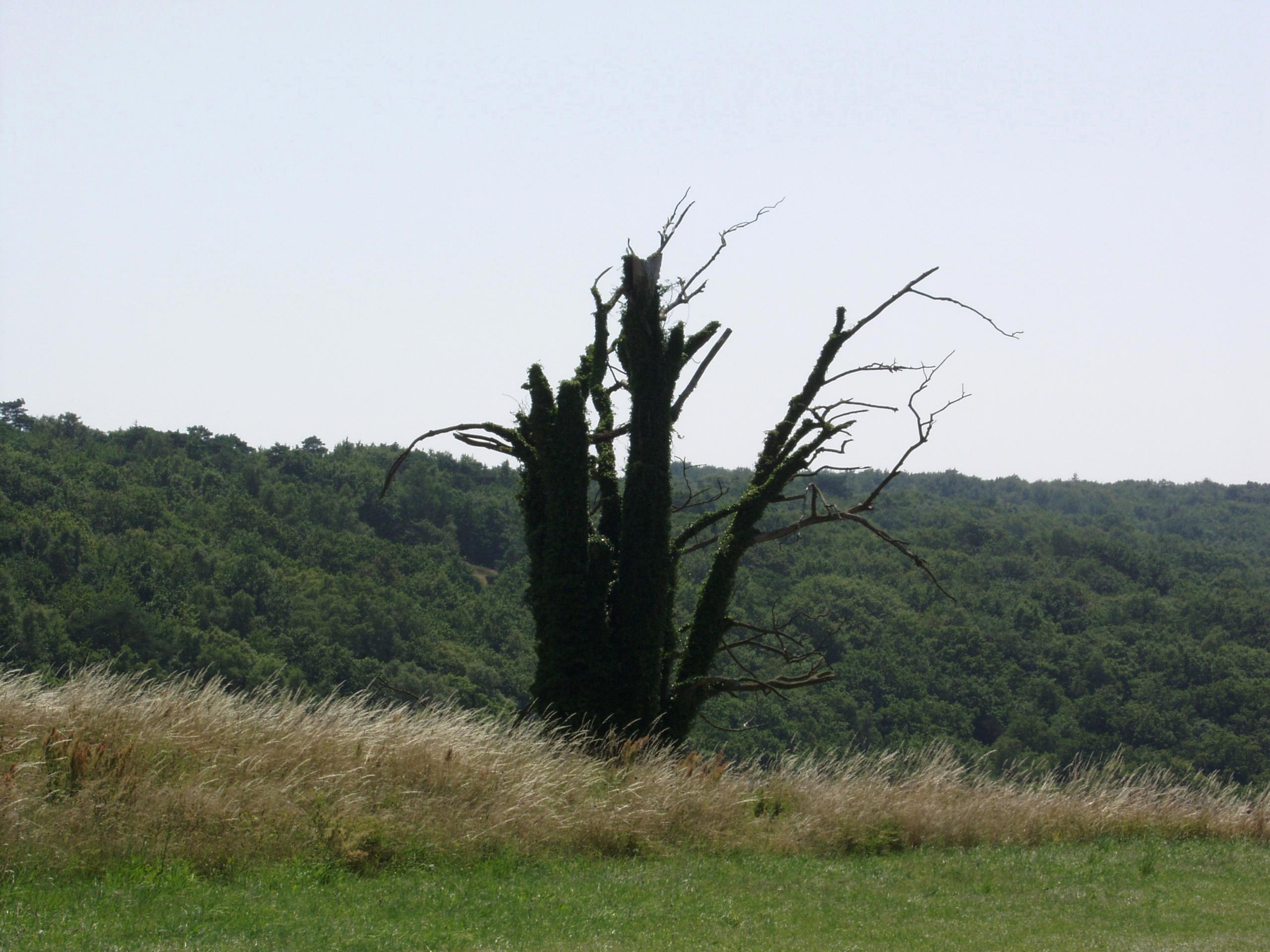 gigantyczne czarne osły